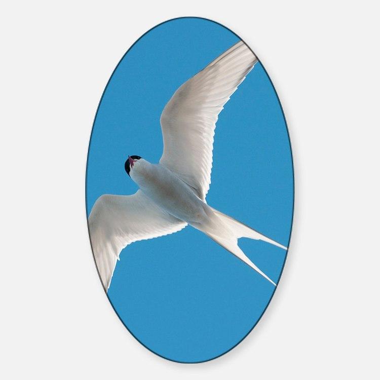 Arctic tern - Sticker (Oval)