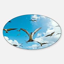 Arctic terns in flight - Sticker (Oval)