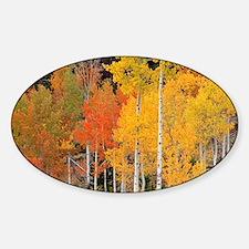 Autumn Aspen trees - Decal
