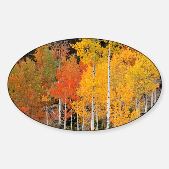 Autumn Aspen trees - Sticker (Oval)