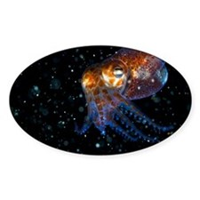Atlantic bobtail squid - Decal