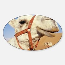 Camel - Decal