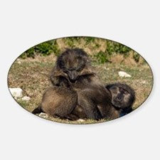 Chacma baboon grooming pair - Decal