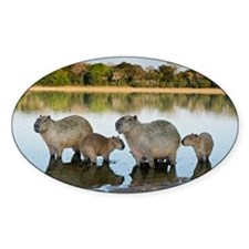 Capybara family - Decal