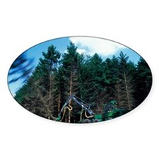 Commercial forestry - Decal