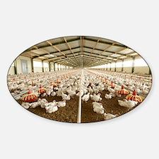 Chicken farm - Sticker (Oval)