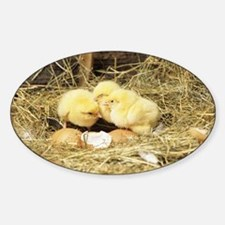 Chicks - Sticker (Oval)
