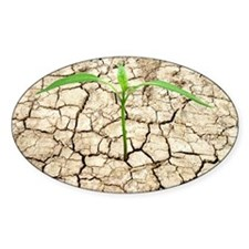 Cracked mud and seedling - Decal