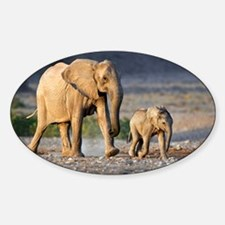 Desert-adapted elephants - Decal