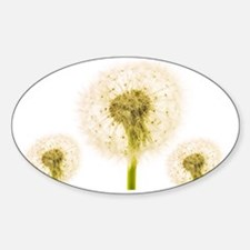 Dandelion seed heads - Sticker (Oval)
