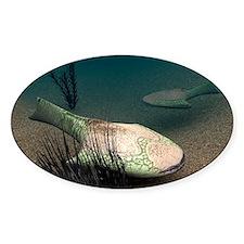 Drepanaspis sp. prehistoric fish - Decal