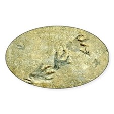 Dinosaur footprint fossils - Decal