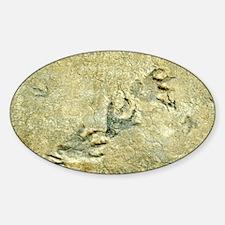 Dinosaur footprint fossils - Decal
