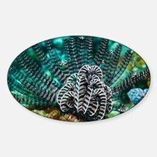 Featherstar on a reef - Decal