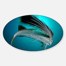 Flying gurnard in a fishing net - Decal