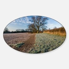 Field and trees at dawn, Devon - Decal