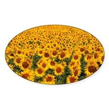 Field of sunflowers, France - Decal