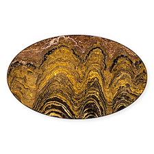 Fossil stromatolite - Decal