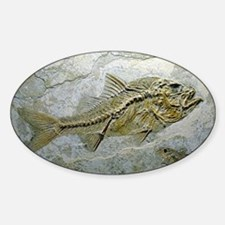 Fish fossil - Decal