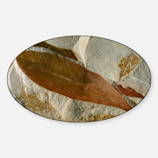 Glossopteris leaf fossils - Sticker (Oval)