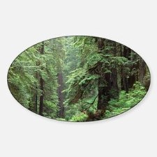 American forest - Sticker (Oval)