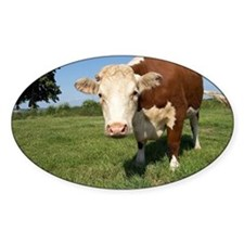 Hereford cow - Decal