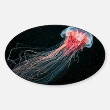 Lion's mane jellyfish - Sticker (Oval)