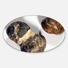 Manganese nodules - Sticker (Oval)