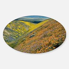Mentzelia pectinata - Sticker (Oval)