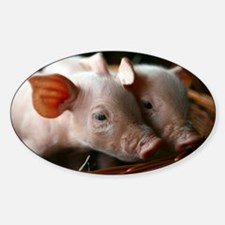 Piglets - Decal