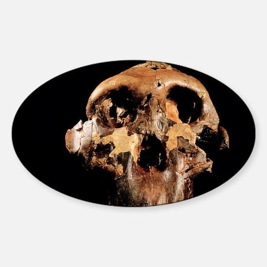 Paranthropus boisei skull - Sticker (Oval)