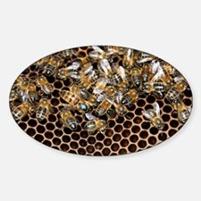 Queen bee with worker bees - Decal