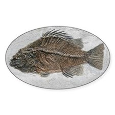 Prehistoric perch fossil - Decal