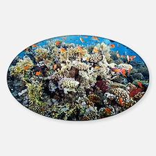 Reef scene - Sticker (Oval)
