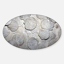 Scallop fossils - Sticker (Oval)