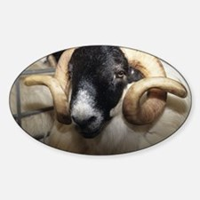 Scottish blackface ram - Sticker (Oval)