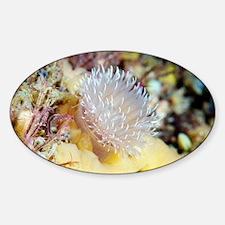 Sea anemone - Decal
