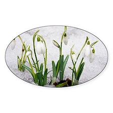 Snowdrops (Galanthus nivalis) - Decal