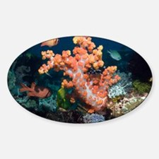 Soft corals - Decal