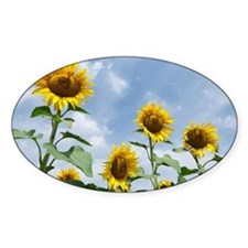 Sunflowers - Decal