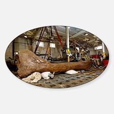 Tyrannosaurus rex femur bone - Decal