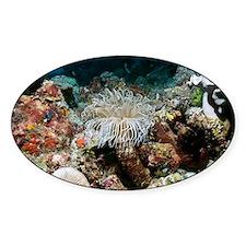 Tube anemone - Decal