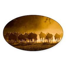 Wildebeest herd - Decal
