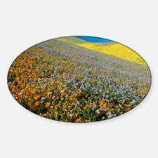 Wildflowers, California - Decal