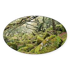 Wistman's Wood, Dartmoor - Decal
