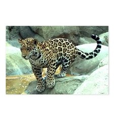 Jumping Jaguar Postcards (Package of 8)
