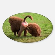 Baboons grooming - Sticker (Oval)