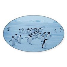 Adelie penguins - Decal