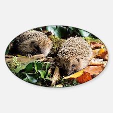 Baby hedgehogs - Sticker (Oval)