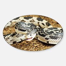 American pine snake - Sticker (Oval)
